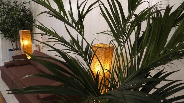 pohovka, palma, světla