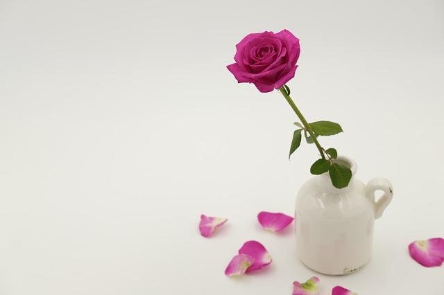 růžová růže.jpg